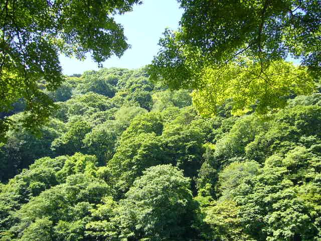 緑の木立ち